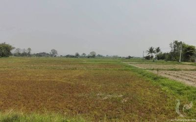 Large Land for Sale in Mae Taeng